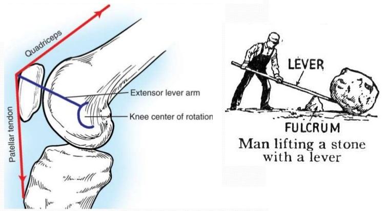Lever Arm Diagram : Patella osteopathy singapore