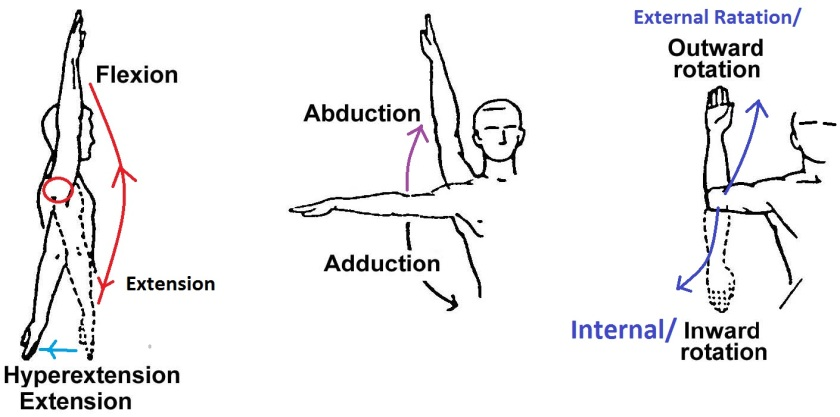 MOVEMENTS AT THE SHOULDER