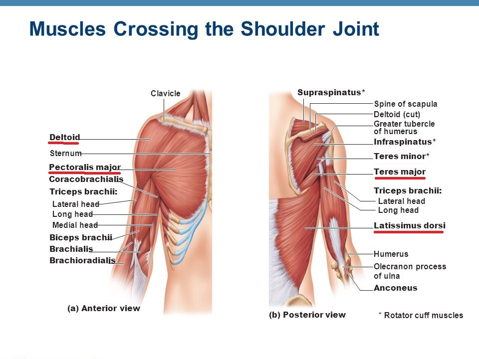 Shoulder Osteopathy Singapore