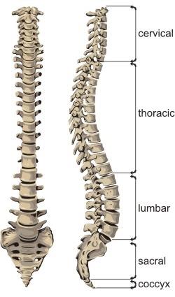 osteopathyspine