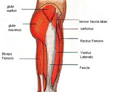 Glute, Hip, and Thigh Exercises for Strength Glute, Hip, and Thigh Exercises for Strength new pics