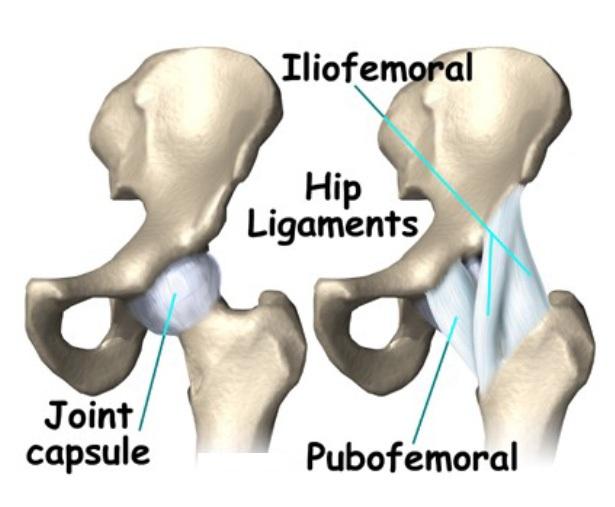 Anatomy Osteopathy Singapore