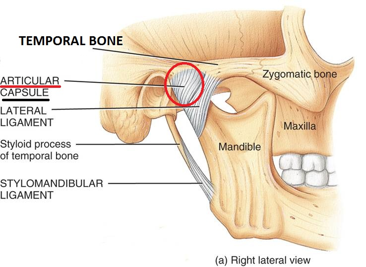 Temporomandibular (TMJ) Joint and its Disorder – Osteopathy Singapore
