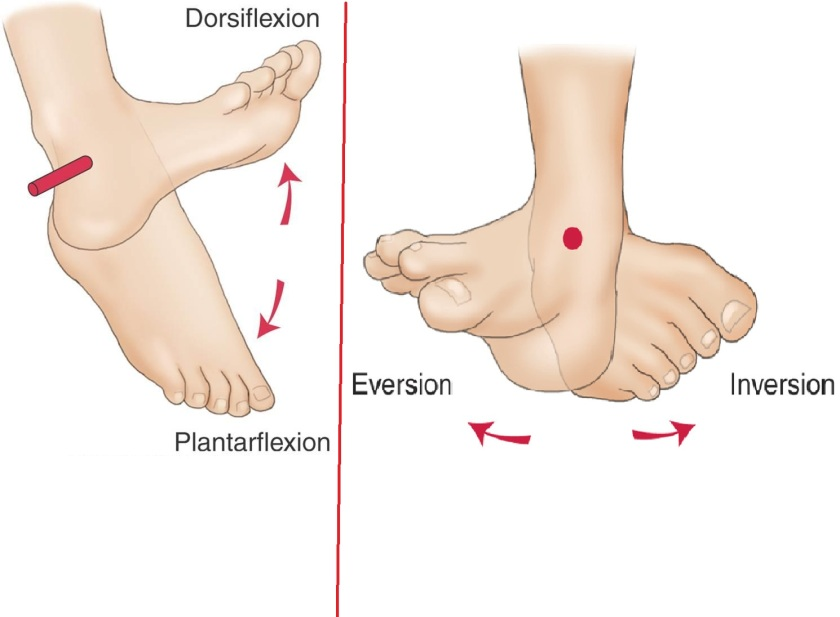 dorsi and plantar flexion