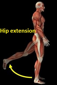 hip extention
