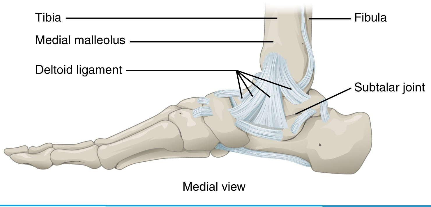 Ankle 101 – Osteopathy Singapore