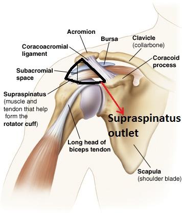 Rotator Cuff Injury – Osteopathy Singapore